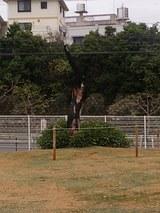 沖国大:焼けこげた木