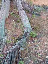 沖国大:木の根元